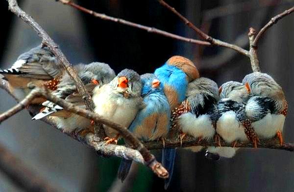 bird-family-1