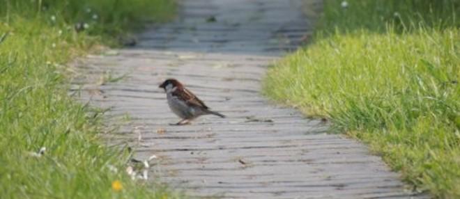 path_bird_grass_232724